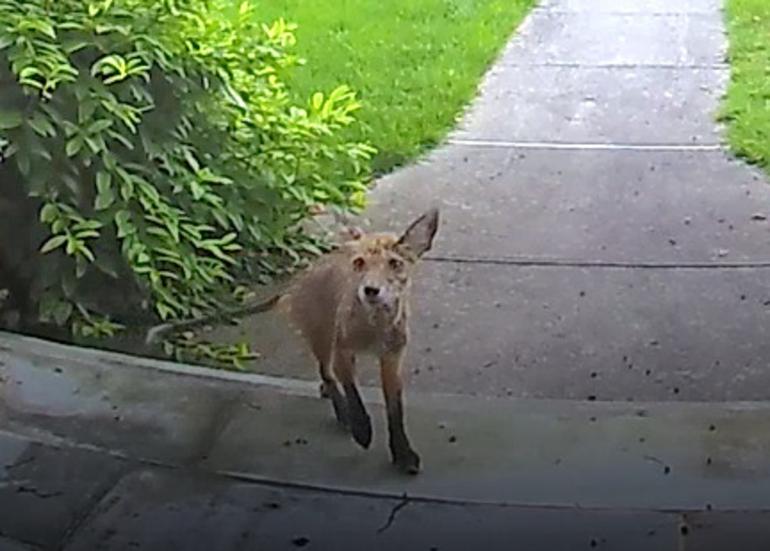 Fox on Boulevard Westfield