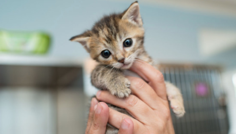 Kittens Available for Adoption in Parsippany | TAPinto