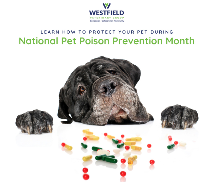 March is Poison Prevention Month – Keep Your Pets Safe from Household Toxins