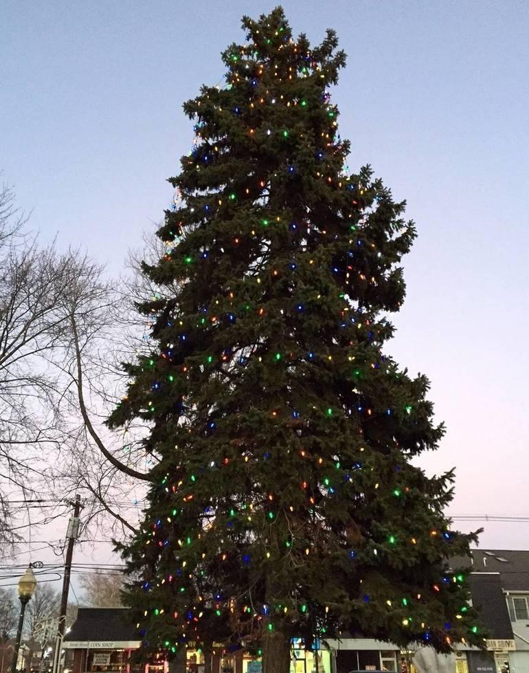 Scotch Plains Christmas Tree.JPG