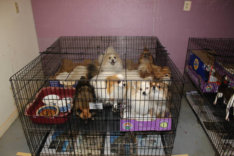 Scotch Plains pet rescue 4.JPG