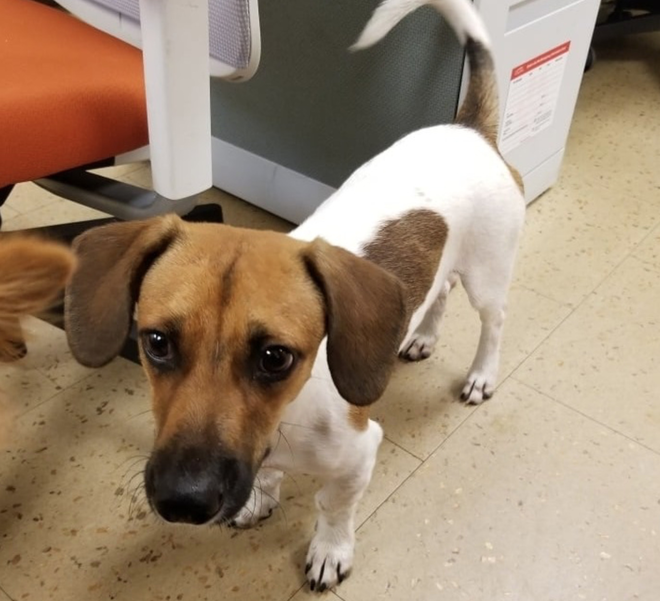 Dog Found On Riverside Drive in Coral Springs