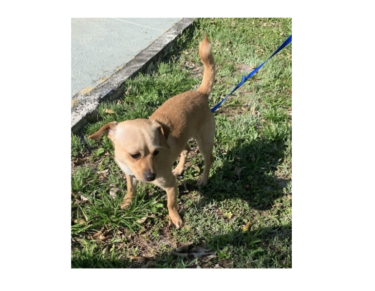 This dog was found at 9600 Westview Drive in Coral Springs,