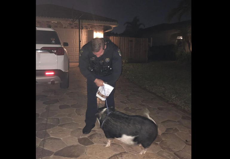 "Coral Springs Police: ""There's A Pig At My Front Door"""