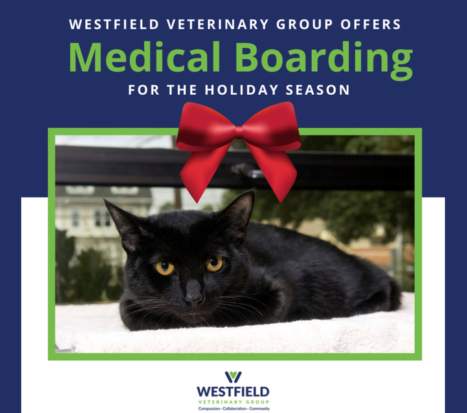 Medical Boarding Services from Westfield Veterinary Group