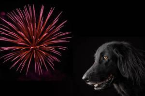 roxbury, fireworks, dogs