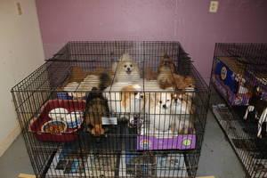Carousel image bf4a5e4ce89efe36312b scotch plains pet rescue 4