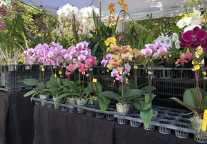 Sawgrass Nature Center & Wildlife Hospital To Host Outdoor Orchid And Plant Festival On April 10 And 11
