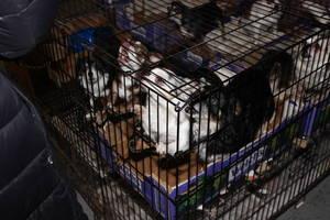 Carousel image f0d00dab33b3649d5f06 scotch plains pet rescue 2