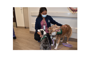 Pet Therapy Dogs Deliver Message To Broward Health Coral Springs Nurses In Honor Of National Nurses Week