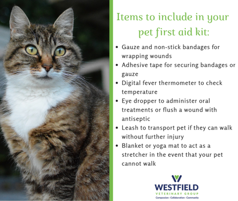 April is Pet First Aid Awareness Month | TAPinto