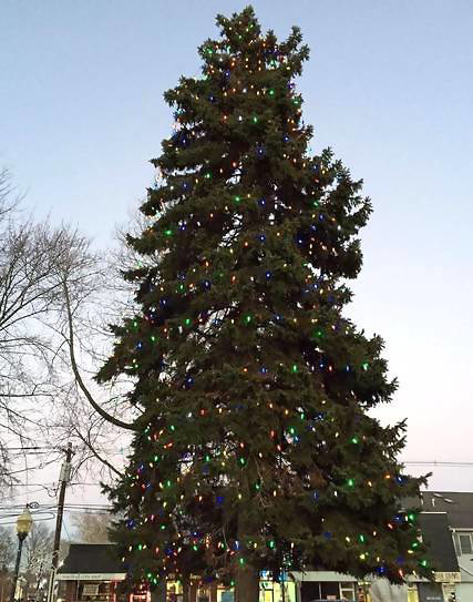 Top story 70bbe622b28a09fd14af scotch plains christmas tree