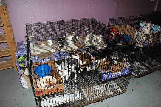 Top story c4a16a7ec8b3b6cd50d4 scotch plains pet rescue 3