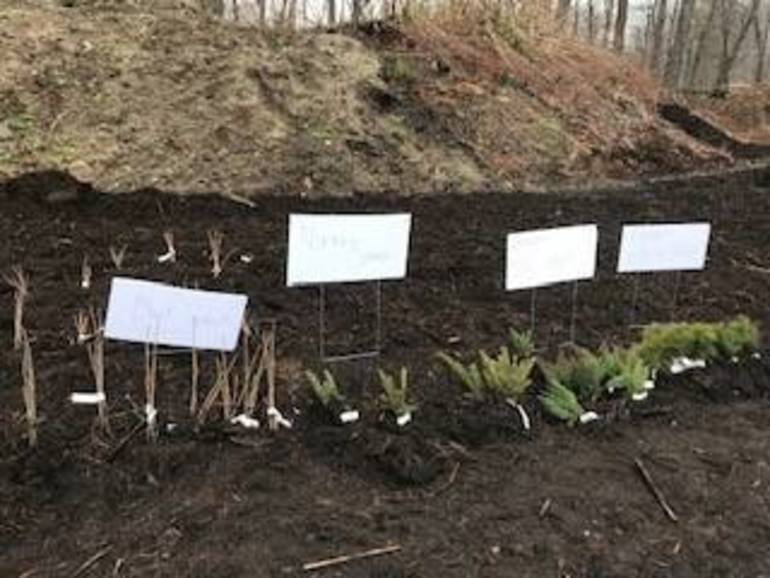 seedling pic 1 2018.jpg