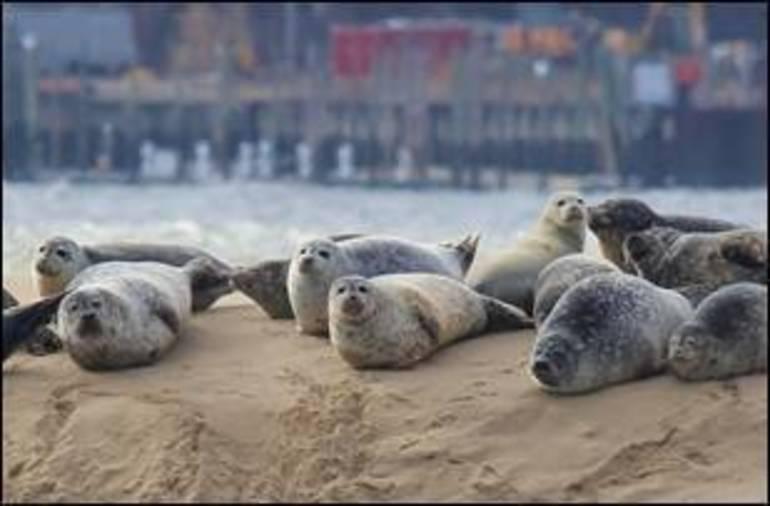 Seal Picture Joe Reynolds.jpg