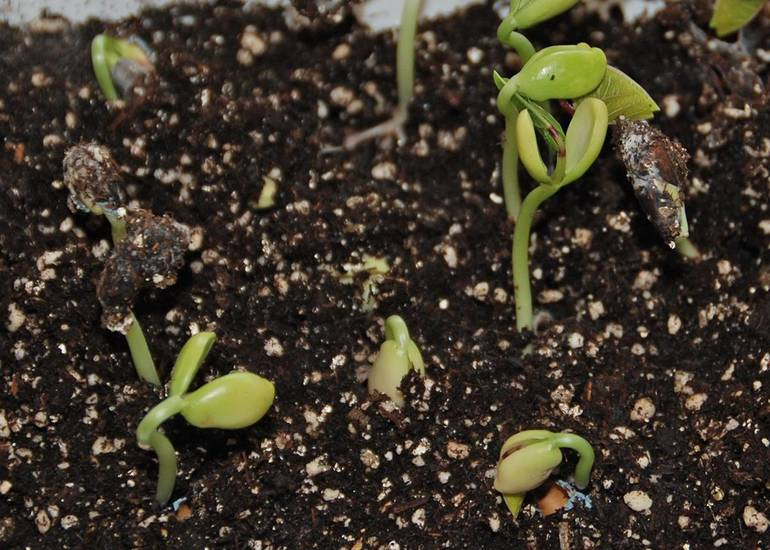 Best crop e0374282f56b9d7db2b8 seeds sprouting
