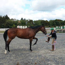 Carousel image 3930a7d26f54d33c0042 second chance thoroughbreds