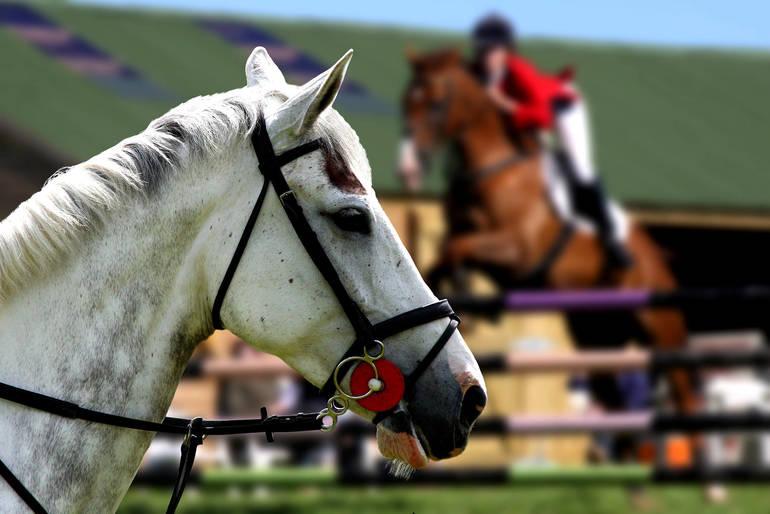 shutterstock_28848857 white horse with jumper in background.jpg
