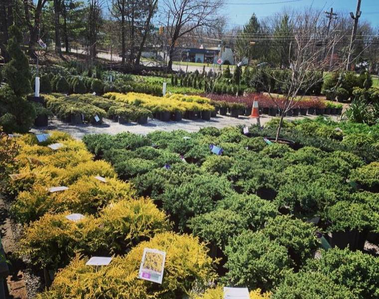 Sparta Nursery & Garden Center has Shrubs and Trees Being Delivered Weekly!