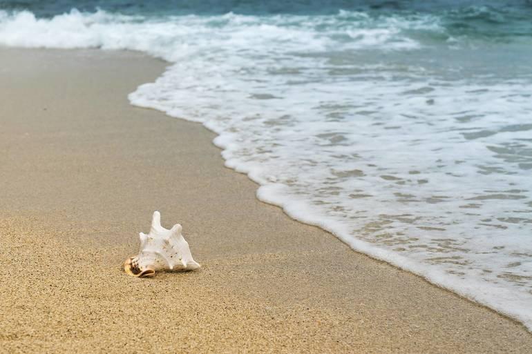 shellfish-3062011_1920.jpg