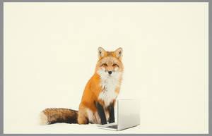Carousel image 1b58a3f7812567fed0d2 shapiro foxes