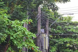 Carousel image e19a141355cf09cd01b0 shutterstock 1191761749 power lines in treess