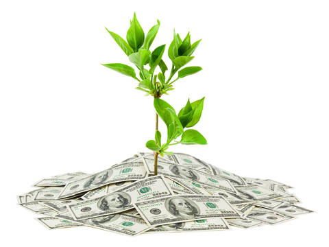 Top story e44d91f63f0a54f2e2ed shutterstock 70559083 100 dollar bill pile with tree growing up