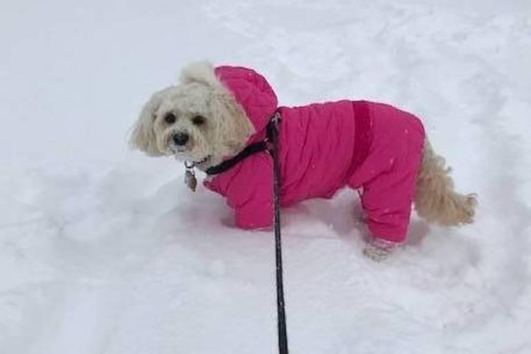 dog in snow Westfield