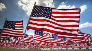 Somerville Flag Day Festival: Collecting Donations for US Troops