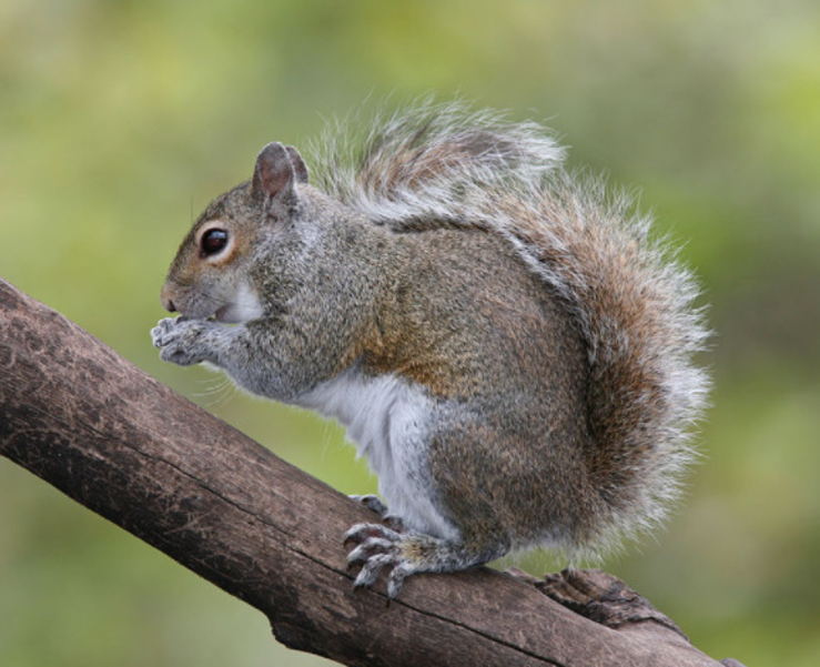 Best crop 8448c8ce5a2bb9217531 squirrel