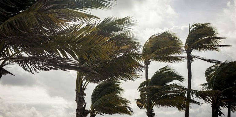 storm-clouds-over-palm-trees_Thinkstock.jpg