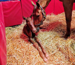 Carousel_image_d2a0459e0c7806686191_starr_bear_and_first_dude_filly