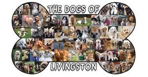 Carousel image d8ab455e4061e95c1d21 staci dog cover facebook 2