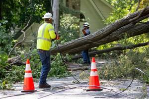 Carousel image e350d86ea898f4e48342 storm tree now