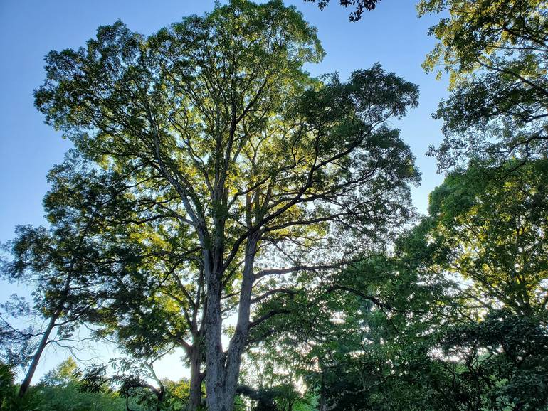 sun thru trees 2.jpg