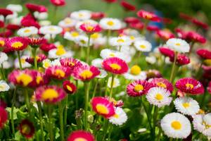 Carousel image 6ae400847b5577b739d1 summer flowers