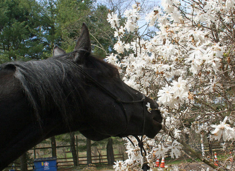 Team Velvet, Inc. Announces Horses of Happiness Photo Contest, New Projects