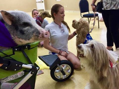Top story 7bb59f6918932eb39aca therapy dogs 4