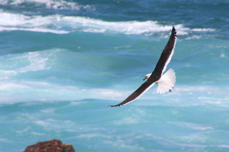 time-lapse-photo-of-soaring-bird-above-the-sea-770931 (1).jpg
