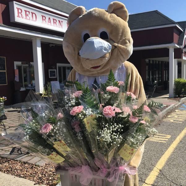 Towaco Teddy with flowers May 2020