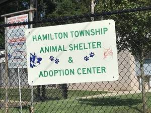 Hamilton Animal Shelter Reducing Adoption Fees for Feline Friends