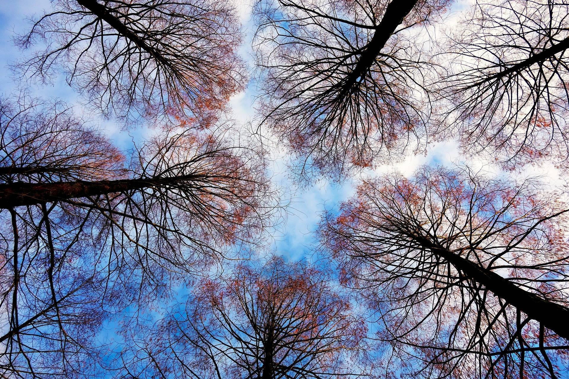 tree-tops-2991743_1920.jpg