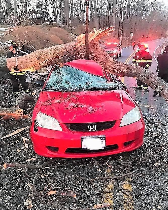 tree-car.jpg