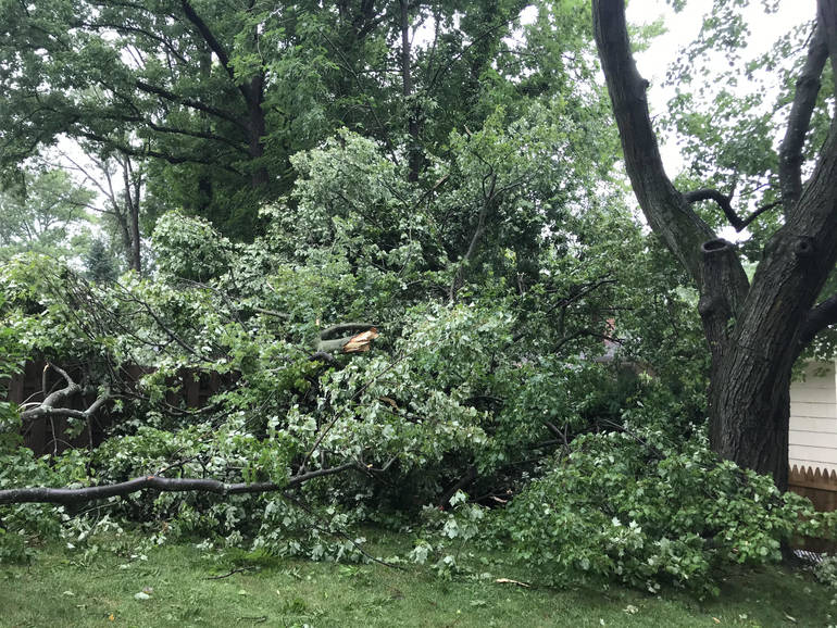 Downed tree in Fanwood.
