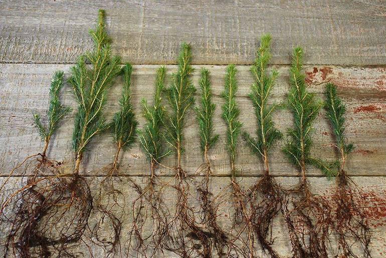 Best crop 234fc05632ef656ccdb4 tree