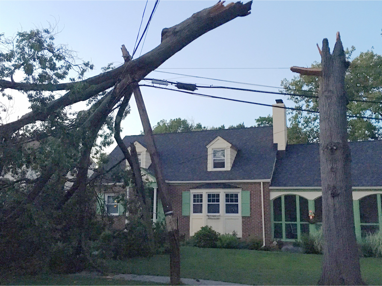 A tree snapped on Second Street in Fanwood.