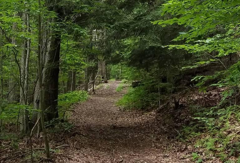 Trail at Lillibridge (2).jpg