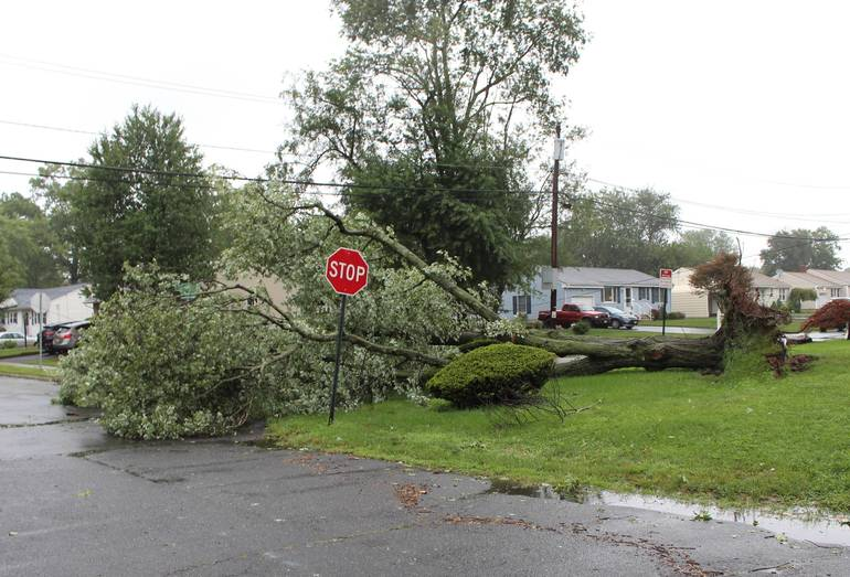 Weather Service: Fast Winds, Soggy Ground Could Compromise Trees