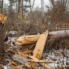 Carousel image 66259389234347f9856f tree down weather storm hudson valley hero
