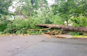 Carousel image c76e5c864cf379f03f25 tree down 3 092618